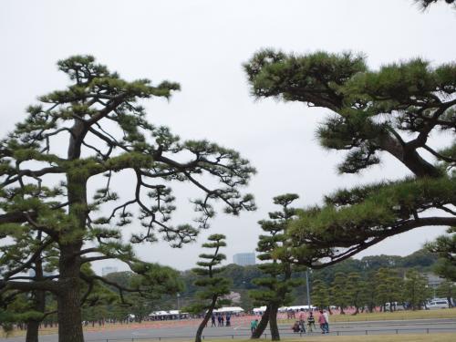 2016年 春期 皇居 乾通り 通り抜けからの千鳥ヶ淵、武道館、田安門の桜
