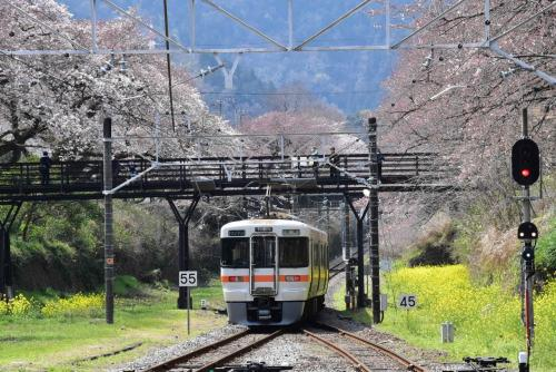 御殿場線山北の桜並木・菜の花と鉄道 2016(神奈川)