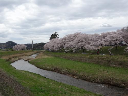 島根 斐伊川堤防桜並木