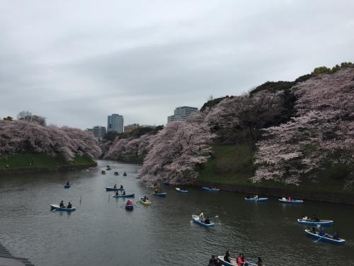 東京桜巡り<2>