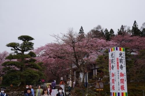 長野の春を彩る「花の旅」Vol.3<光前寺の枝垂れ桜と水仙>