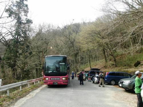 イワウチワを見に北茨城の花貫渓谷「土岳山」に・・・