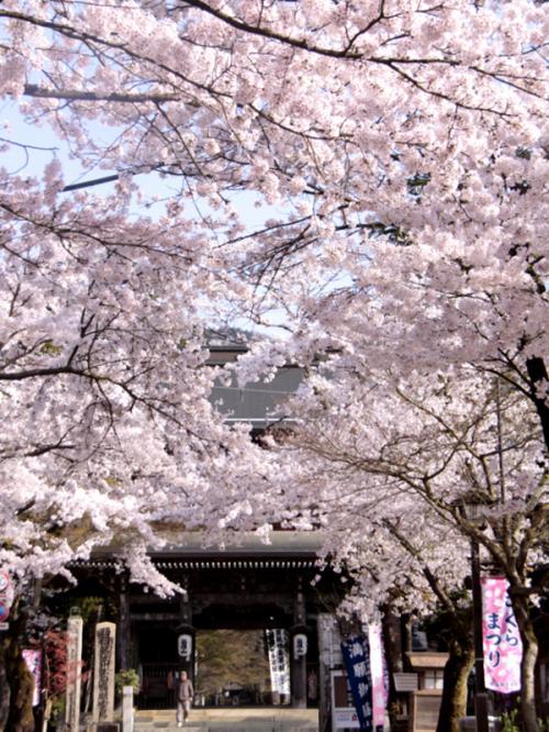 根尾谷の淡墨桜を訪ねて1泊2日の旅 4−4 華厳寺・名古屋城 編