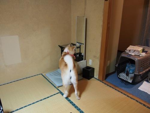 大館アメッコ市 秋田犬に会いに行く旅