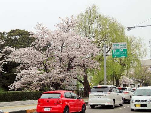 土浦城址(亀城公園) 桜まつり