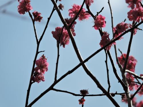 斎藤茂吉記念館特別展示と桜を見る