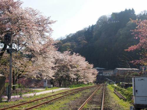 [わたらせ渓谷沿い]咲いてる桜を求めて少し北へ、、花桃が綺麗に咲いてました☆