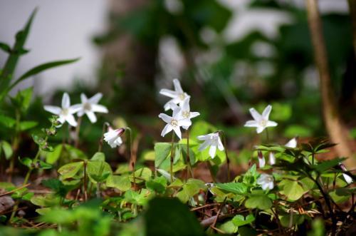 ◆福島・四季・彩々・Part,56・行春の候