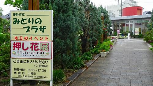 小雨の荒巻バラ公園 その6完 みどりのプラザ イベント等。