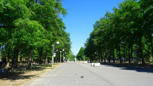 五月晴れの鶴見緑地(1) 駐車場から咲くやこの花館まで。