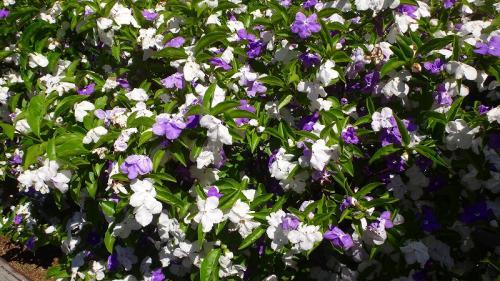 五月晴れの鶴見緑地(3) 咲くやこの花館 中巻。