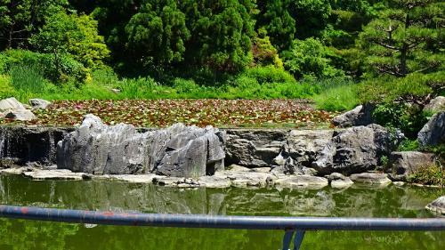 五月晴れの鶴見緑地(6) 日本庭園からバラ園までの見学。