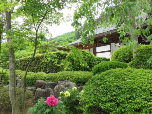 満開の牡丹が美しい宝徳寺(でもなんかいる)