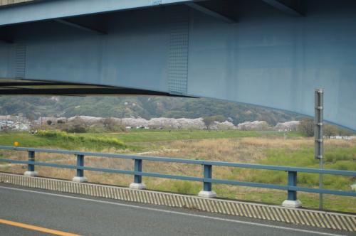 背割堤(京都府八幡市)漂流