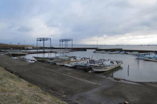 手賀漁港周辺でバードウォッチング [2015](1)