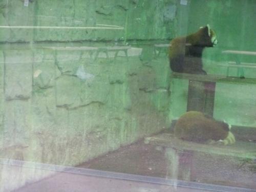 川崎市のゆめぎがさき動物公園の探訪