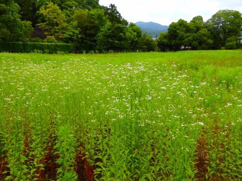 祇王寺の庭はただひたすら青く 詩仙堂の青く白い庭には赤い花が溢れ出していた。
