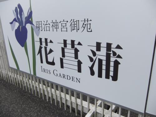 今が見ごろの明治神宮の花菖蒲園