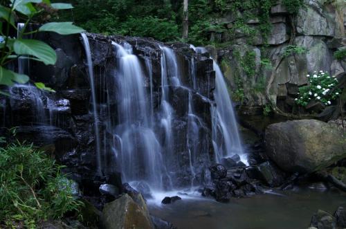 ◆梅雨にけむる勢至堂五滝と潤う野の花