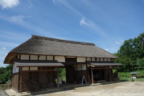 梅雨の晴れ間に昭和記念公園ゆらり