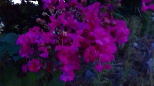 夜明けの散策 宝塚市安倉上池の風景。