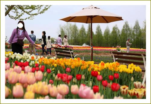 Solitary Journey [1753] 花はみんなをしあわせにする♪75万本のチューリップが満開!太陽の畑&菜の花<世羅高原農場>広島県世羅町