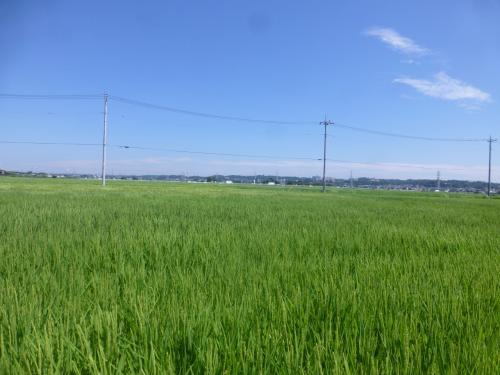 【坂東札所巡礼9‐1】座間のひまわりと農家cafeでランチ