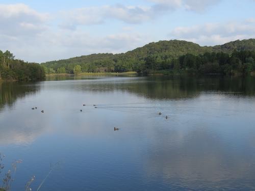小野鴨池の渡り鳥