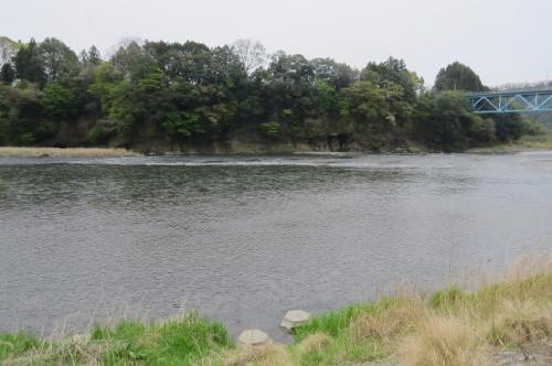 那珂川でバードウォッチング [2015](1)