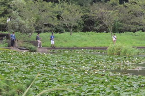 川尾池でバードウォッチング [2015](1)