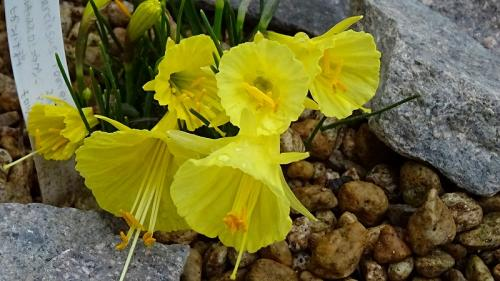 早春の花博記念公園 咲くやこの花館と公園風景 第四巻 完。