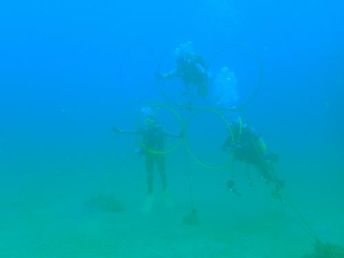 2016潜り納め ダイビングin黄金崎