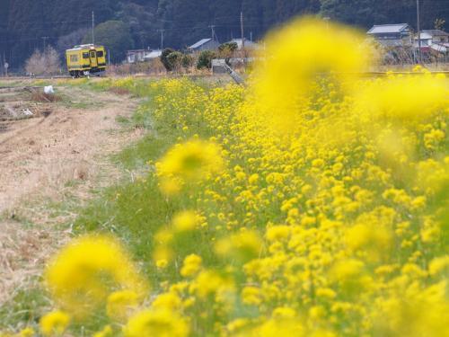 春色のいすみ鉄道
