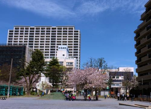 街の小さな公園[赤羽公園]にも桜が咲きました。