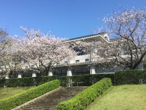 桜も満開になってきたので鹿屋市中央公園に    ☆鹿児島県鹿屋市