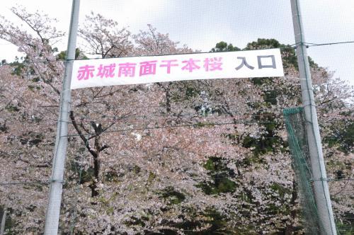 初めての赤城千本桜