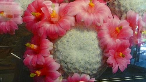 大阪花博公園 咲くやこの花館の見学 その3。