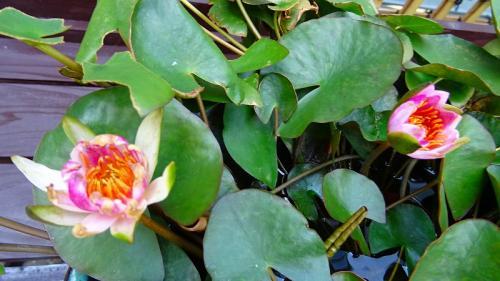 大阪花博公園 咲くやこの花館の見学 その4。