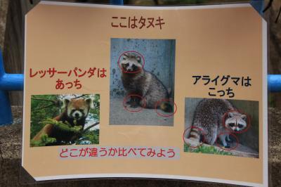ここはタヌキ アライグマはこっち レッサーパンダ