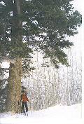 六本木の写真