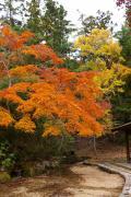 宮島の写真