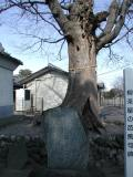 高崎市の写真