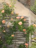 所沢市の写真