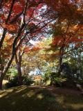 長岡市の写真