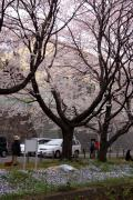 大和市の写真