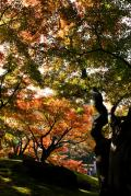 岡山市の写真