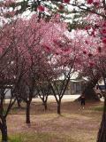 明石市の写真