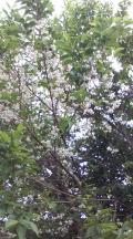 大分県の写真