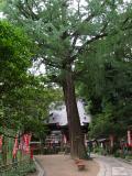 町田市の写真