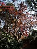 鎌倉の写真